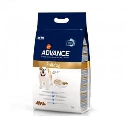 Advance Bulldog Inglés