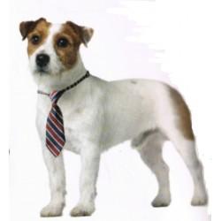 Corbata para perros