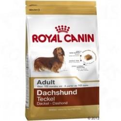 Royal Canin Teckel Adulto