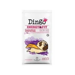 Dingo Energy & Fit