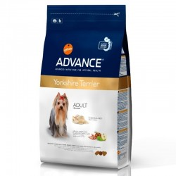 Advance Yorkshire Terrier