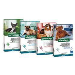 Pipeta Advantage perros de 10 kg a 25 kg