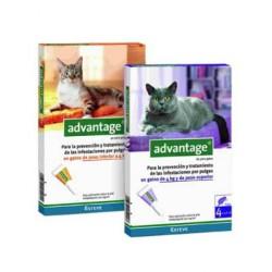 Pipeta Advantage gatos