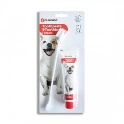 Kit dental cepillo + pasta de dientes