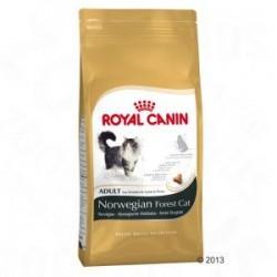 Royal Cani Bosque de Noruega