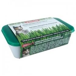 Hierba para gatos en Bandeja de Plástico
